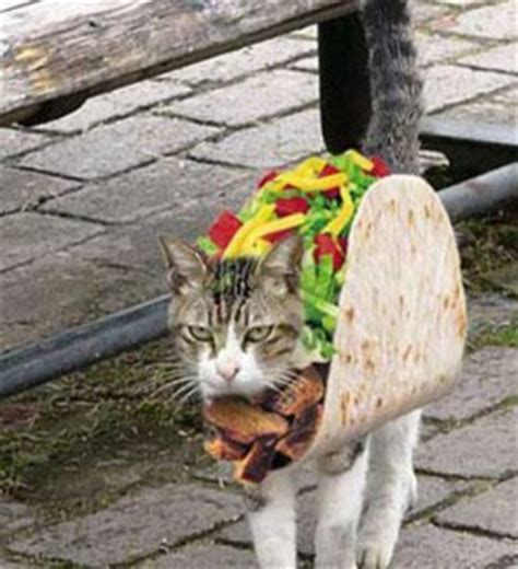 Animals Wearing Costumes-Cutest Pictures | Interesting