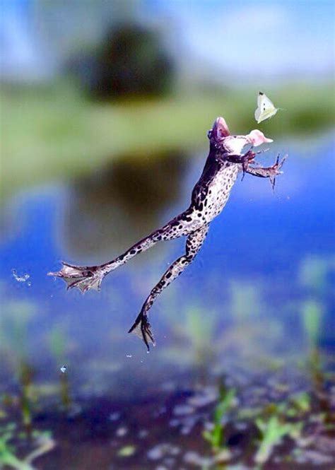 Jump, frog, jump! Catch that bug!   JUMPING JEHOSSAFAT