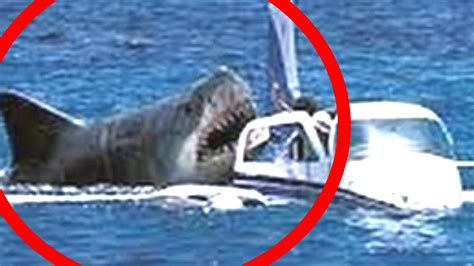 REAL MEGALODON Caught on Camera 2016 ! - YouTube