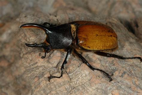 Scarab beetles | Space for life