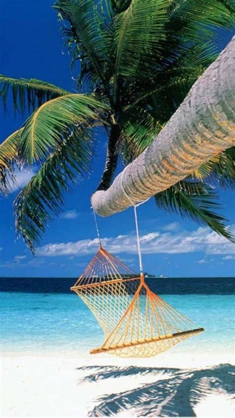 relaxation - a hammock hanging from palm tree on a sunny