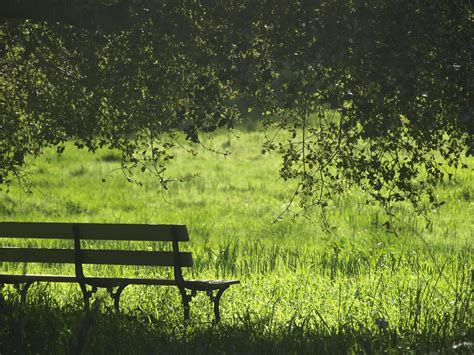 Grass, park bench, bench and tree HD photo by Olesya